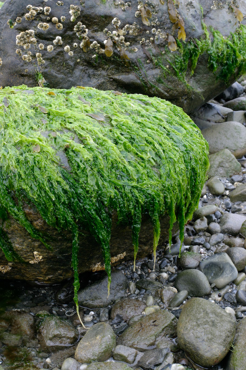 Drippy Green Rock Two
